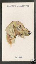 1940 Uk Peter Biegel Dog Art Head Study Player Cigarette Card Cream Color Saluki