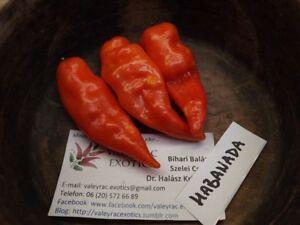 Habanada Sweet Chili - 10+ seeds - Heirloom - SWEET HABANERO!