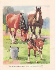 DRAFT HORSES with foals COLT  1930s CHILDRENS Vintage Art Print A.E KENNEDY