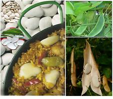 Butter Bean Seeds Spanish Paella Garrofon Large Flat Beans (Climbing)