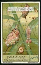 Waterflea And Cyclopen Crustacean 1930s Trade Ad Card