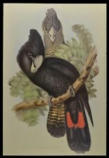 John Gould Great-billed Black Cockatoo British Museum Official Limited Print
