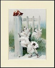 POMERANIAN SPITZ DOGS CHASE CAT LOVELY DOG PRINT MOUNTED READY TO FRAME