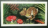 RABBIT & FLY AGARIC MUSHROOMS    Vintage Colour Card