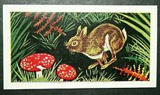 RABBIT & FLY AGARIC MUSHROOMS    Vintage Colour Card