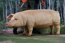 Dragon 1/6 Action Figur Military Food Supply Pig Vieh Schwein K1064