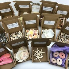 Sea Shells, Urchins, Starfish Craft Packs - 50 Choices - Buy 4 Get 1 Free! Beach