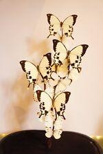 Butterflies in glass dome. Butterfly. Taxidermy butterfly. Butterfly gifts.