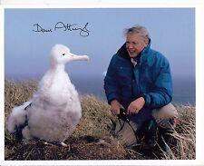 David Attenborough HAND Signed 10x8'' Photograph - Naturalist Broadcaster