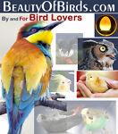 Avianweb / BeautyOfBirds