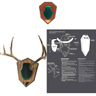 Allen Antler Mounting Kit with Skull Cover & Engraveable Plaque Green