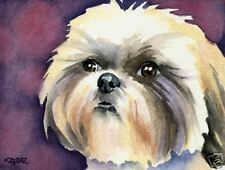 Shih Tzu Dog Watercolor Painting 8 x 10 Art Print Signed by Artist Djr