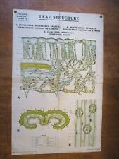 LEAF STRUCTURE, CANVAS-BACKED WALL CHART VINTAGE, c1930's {BIOLOGY}