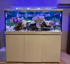 Red Sea Max S 650 Meerwasseraquarium Aquarium LED