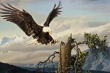 Power Landing - Nancy Glazier Signed Limited Edition Eagle Print 30x23