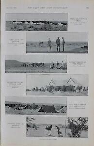 1900 Imprimé Colonel Adye À Prieska Lord Kitchener Consulting Bœufs Pâturage