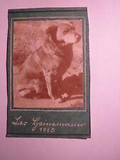 Hund Leo Heinemann - 1915 / Foto