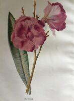 ANTIQUE PRINT C1900 OLEANDER GARDEN FLOWERS BOTANY BOTANICAL PLANTS FLOWER ART