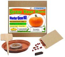 RARE Vanilla Planifolia Bean radicato IMPIANTO//pronto per coltivare indoor//outdoor//un impianto