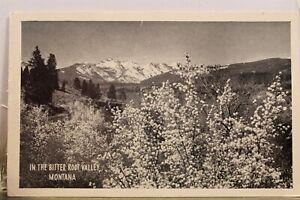 Montana MT Bitter Root Valley Postcard Old Vintage Card View Standard Souvenir