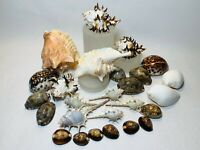 Mixed Lot Seashells, Cowries, Murex, Conch Assorted Craft Shells Mix Free Ship!
