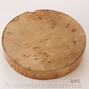 English Burr Lacewood woodturning or wood carving bowl blank.  305 x 53mm. 6303A