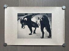 Super RARE! Daido Moriyama - A Stray Dog, Poster, Misawa City, Aomori Pref. 1971