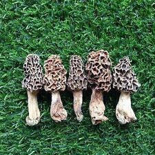 Dried Morel Mushrooms  Kit Fresh Mushrooms  Mushrooms Kit 100g
