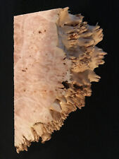 """Maple Burl, Lumber, 6 7/8"""" Long, 3 1/4"""" Wide, 1 9/16"""" Thick, Almost Dry"""