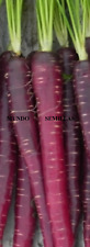 Carrot Purple Very Sweet - 350 Seeds - Purple Vegetable Garden