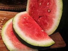 Bradford Watermelon Seed Packet Super Sweet Southern Heirloom