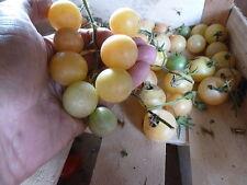 15 graines semences  tomate MIRABELLE BLANCHE petite ronde de france Tomato Seed