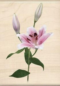 Lily Photo Realistic Collection Inkadinkado Wood Stamp NEW spring flower easter
