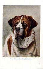 "Wilhelm Kuhnert Bernhardiner ""Cäsar"" Hunde- Motiv Histor. Kunstdruck von 1901"