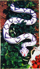 GIANT 6 FT.SNAKE, Inflatable Natural Enemy Scarecrow! Fun decorations for party!