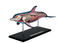 DOLPHIN ANATOMY MODEL/PUZZLE, 4D Vision Kit #26103  TEDCO SCIENCE TOYS