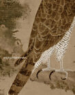 Chinese old painting scroll Eagle hawk standing on an old cypress tree in winter
