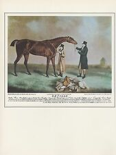 """1974 Vintage HORSES """"ORVILLE"""" FAMOUS 1800's RACEHORSE COLOR Art Print Lithograph"""