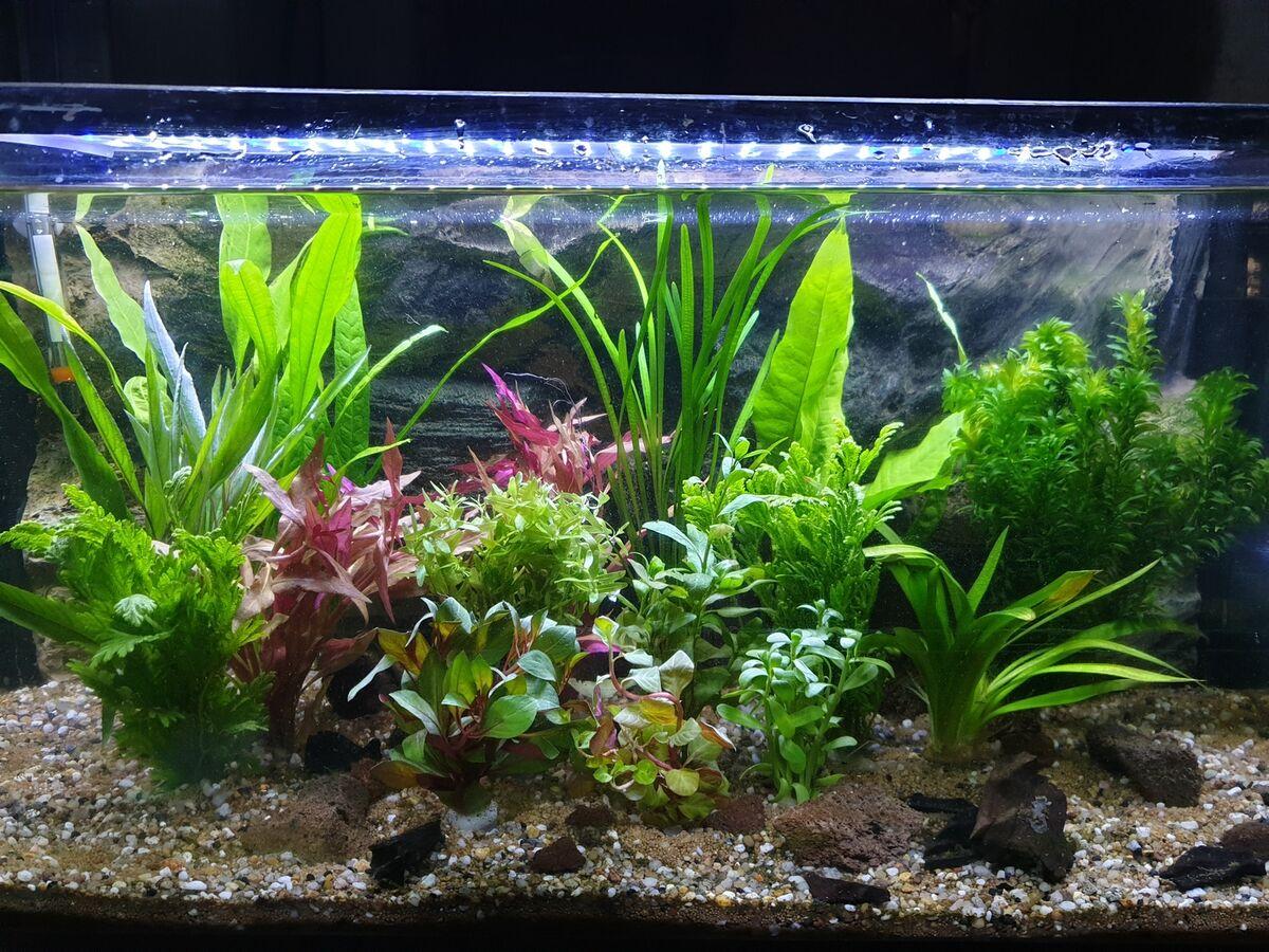 Wasserpflanzen Handel und Service