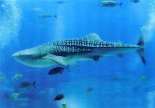 Whale SHARK  - 3D Lenticular Postcard Greeting Card - Marine Animals