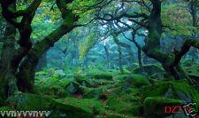 LB FORESTA PLUVIALE sottile VINILE Sfondo Fotografia Sfondo Foto di scena 7x5ft dz279