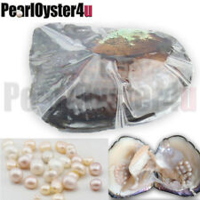 Big Monster Akoya Oyster, 20-30 Natural Pearls, 6-10 Years, Best Party Gifts