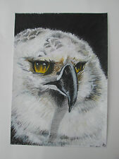 Hand drawn animal pictures, Original Contemporary HARPY EAGLE