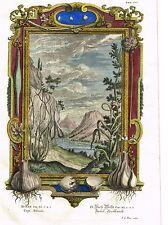 "Scheuchzer's ""PHYSICA SACRA"" Hand Colored Engraving -1731- ""CEPA, ALLIUM"""