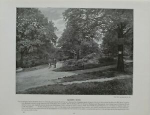 1901 LONDON PRINT + TEXT QUEEN'S WOOD CHURCHYARD BOTTOM WOOD MUSWELL HILL