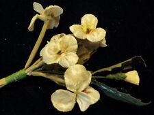 Millinery Flower Velvet Pansies Ivory for Hat Wedding + Hair Y239