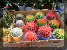100pcs cactus seeds, potted plant seeds family anti-radiation, bonsai plant