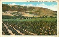 White Border Postcard CA D807 An Orange Grove Near the Foothills Calif 1931 Post