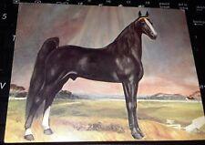 Vintage Postcard Art ALLAN F-1 Foundation Tennessee Walking Horse Stallion Sire