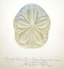 Ocean Seashell BISCUIT SAND DOLLAR  original SIGNED limited edition LARGE SIZE